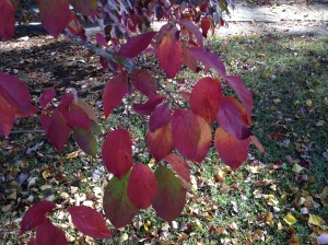 The dogwoods are changing, too.