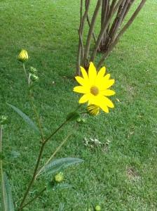 gardening mystery 9 flower