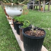 2019-10-29 plants