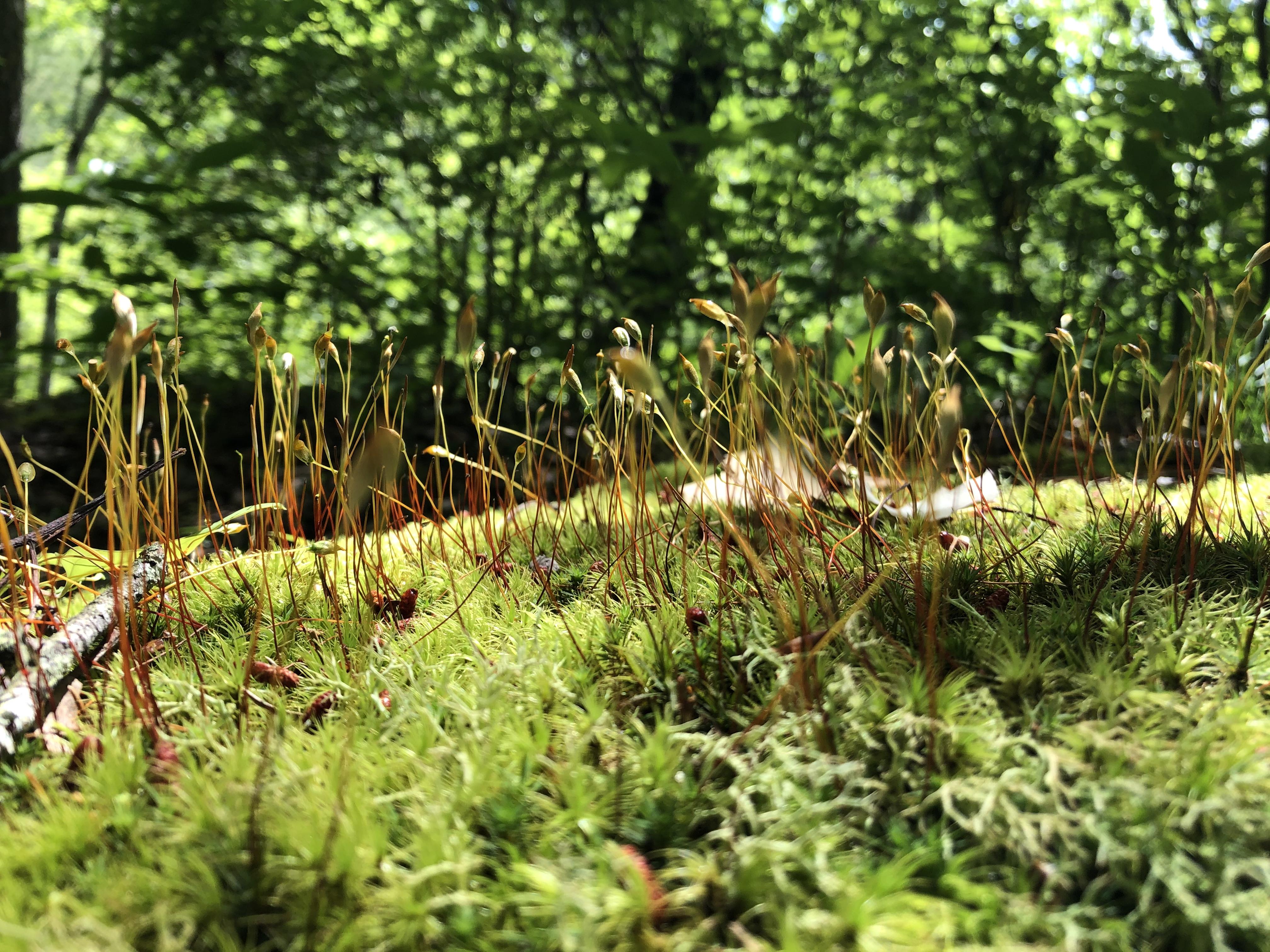 forest floor DeSoto State Park Alabama