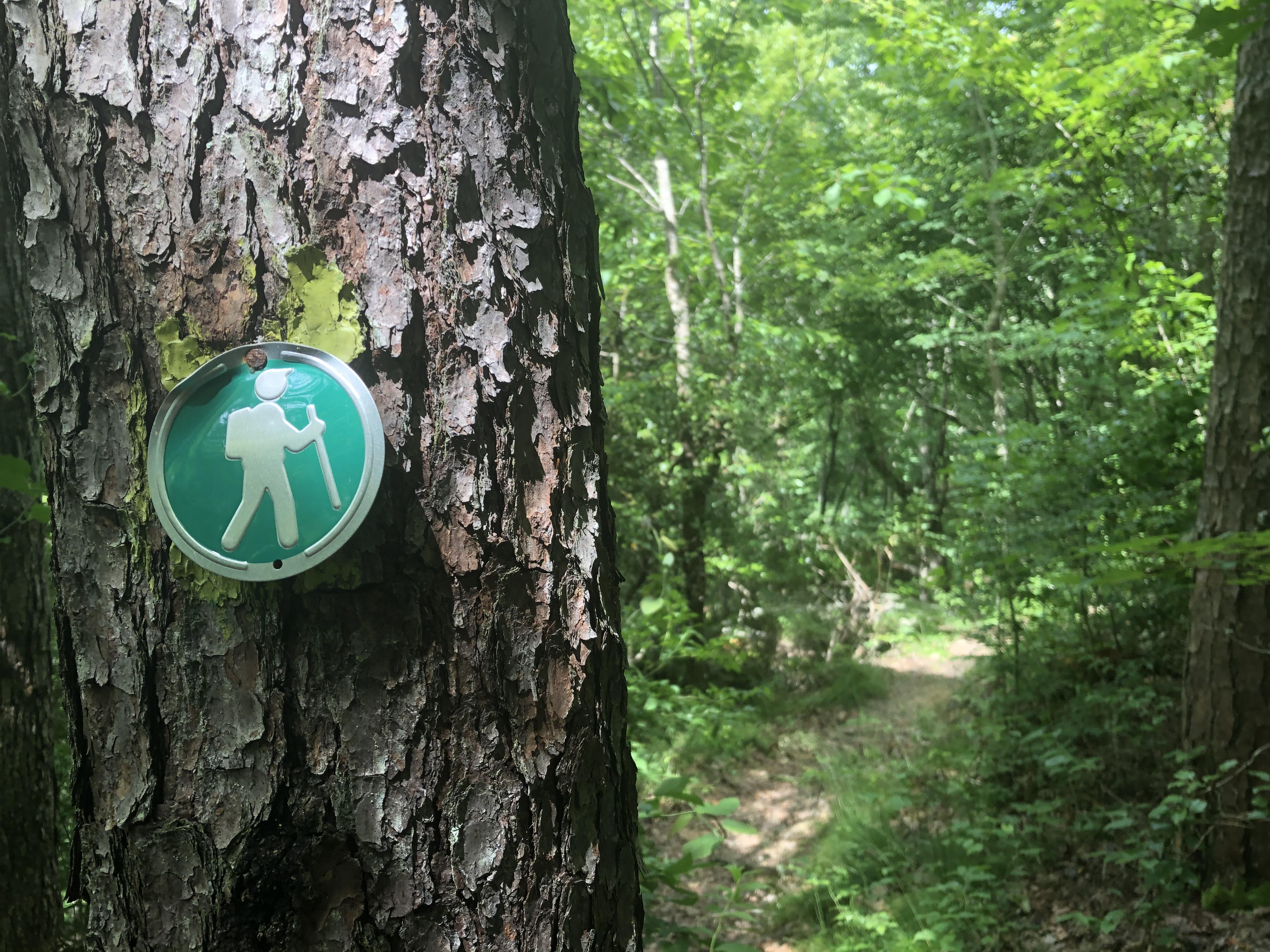hiking trail Desoto State Park, Alabama